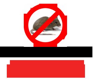 уничтожим мышь