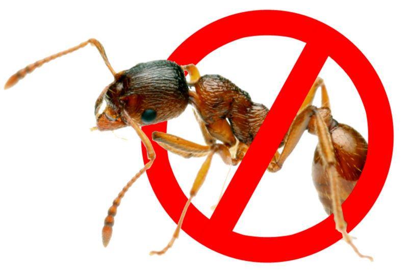 борьба с муравьями в доме