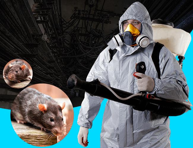 обработка от крыс