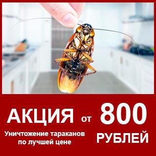 тараканы-виджет-800-руб